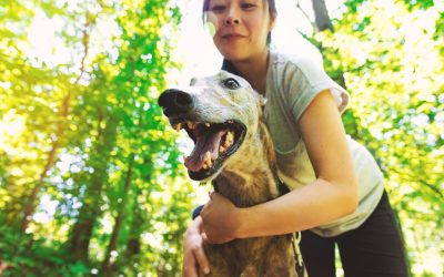 What to know about dog bite liability in Kentucky